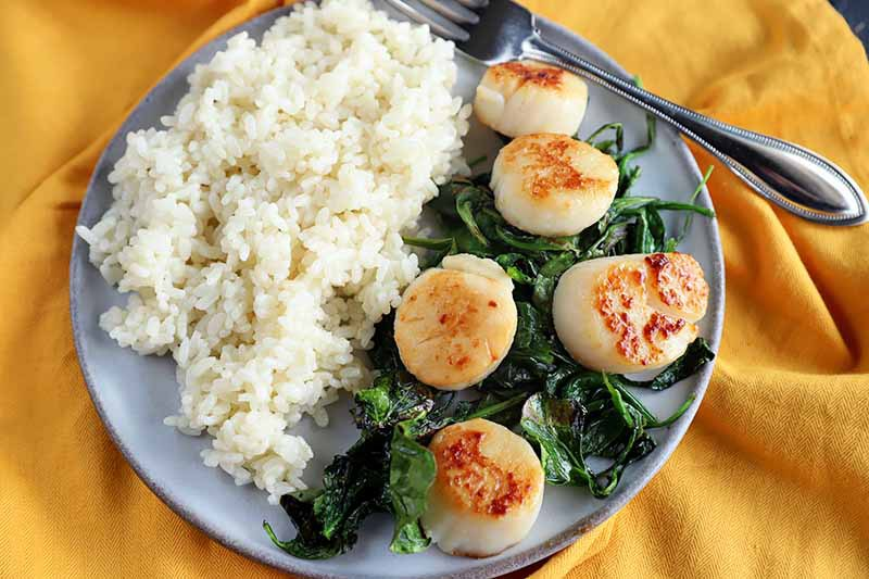 Horizontal image of seared scallops and wilted greens on a plate next to grains.