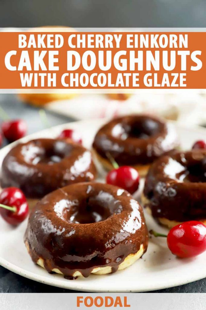 Vertical image of doughnuts covered in a chocolate glaze on a white plate surrounded by red fruit, with text on the top and bottom of the image.
