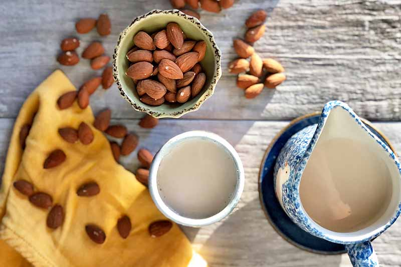 Horizontal top-down image of a bowl of whole nuts and cups of a creamy white liquid on top of a yellow towel.