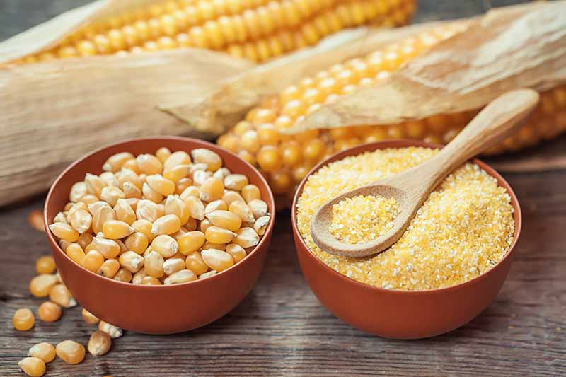 Horizontal image of meal and dried whole corn in brown bowls, one with a spoon.