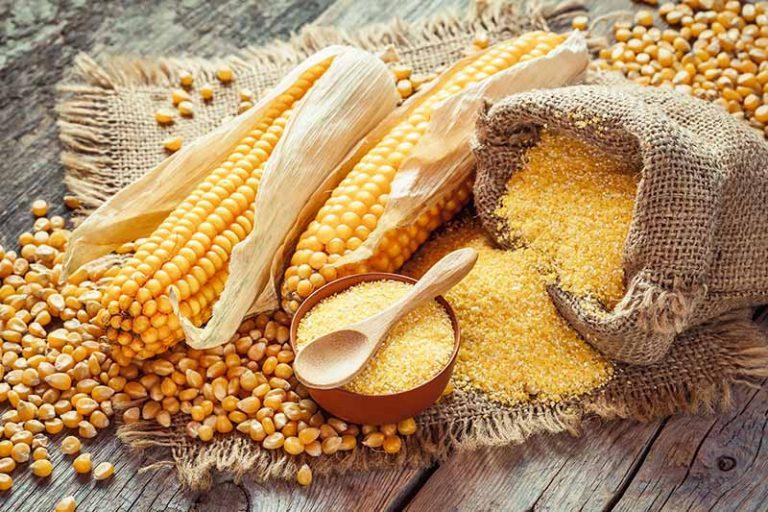 Horizontal image of Cornmeal and whole corn next to a burlap bag.