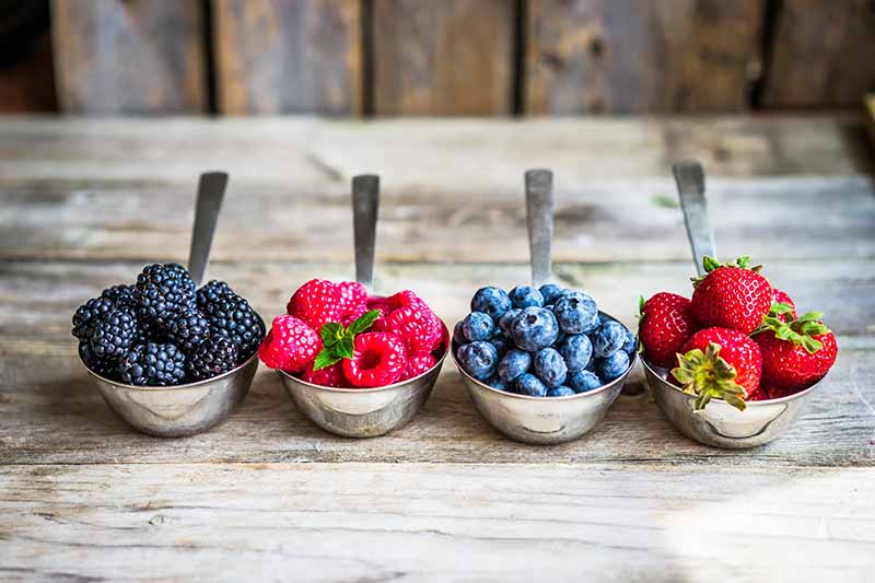 Horizontal image of metal spoons filled with small mounds of fresh fruit on a wooden surface.