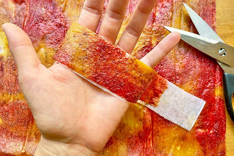 Horizontal image of a hand holding a strip of fruit leather over scissors.