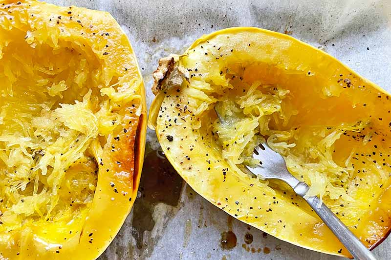 Horizontal image of shredded the inside of a roasted yellow vegetable with a metal fork.