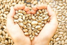 Pinto beans in a pair of human hands forming a heart