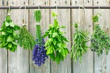 How to Preserve Herbs | Foodal