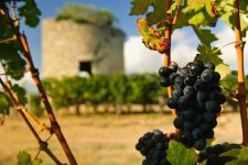 Wine throughout history | Foodal.com