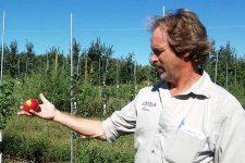 Farmer Norm Schultz with Honeycrisp Apple | Foodal.com